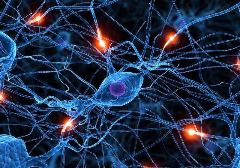 Cerveau-developpement-reseau