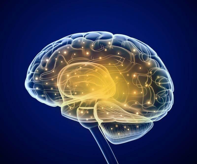 Fonctionnement Cerveau tdah, asperger et autisme