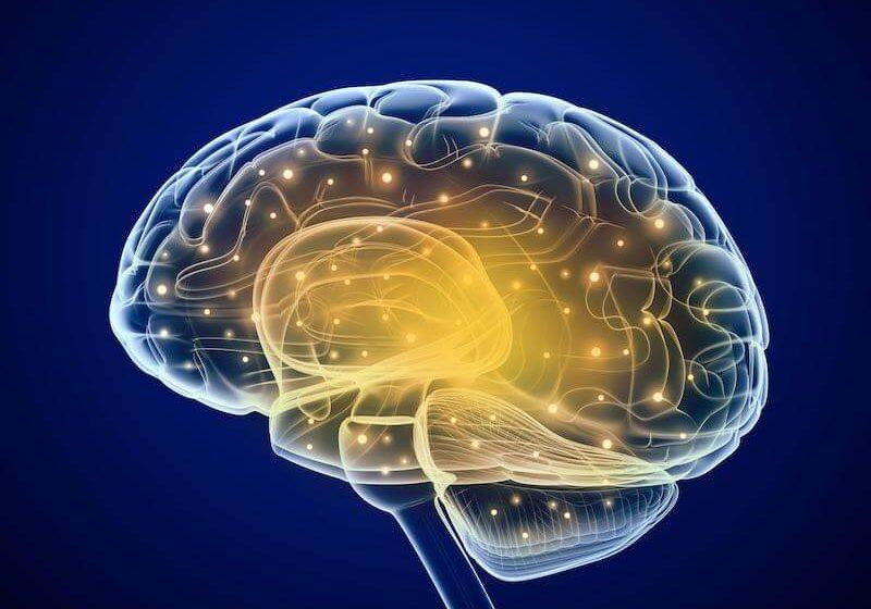 tdah-developpement-cerveau-asperger
