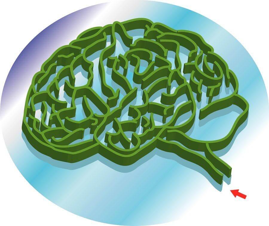 Cerveau asperger autisme tdah