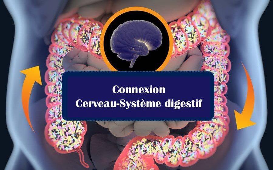 microbiote cerveau