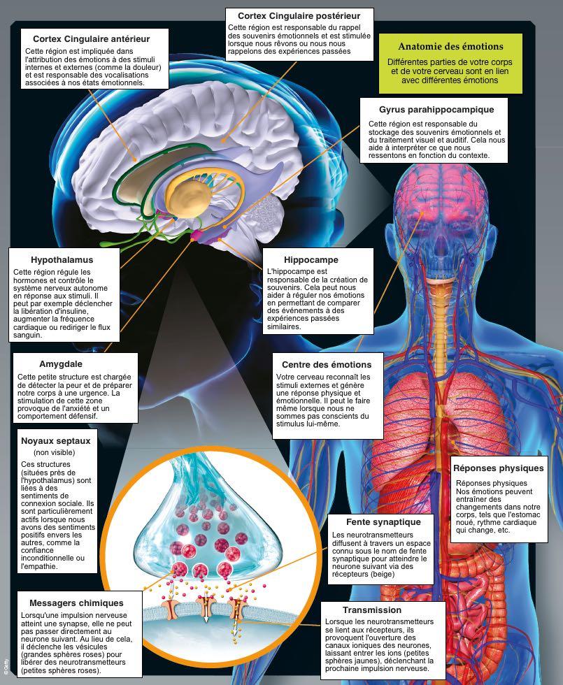 Anatomie des émotions